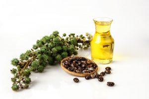 Castor Seeds, Fruit and Oil